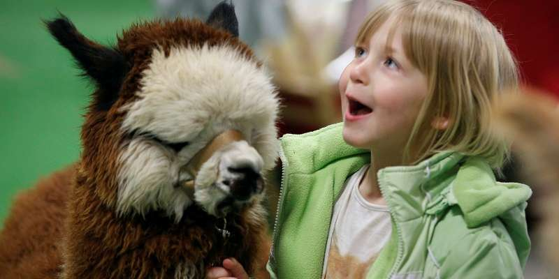 Girl with alpaca.