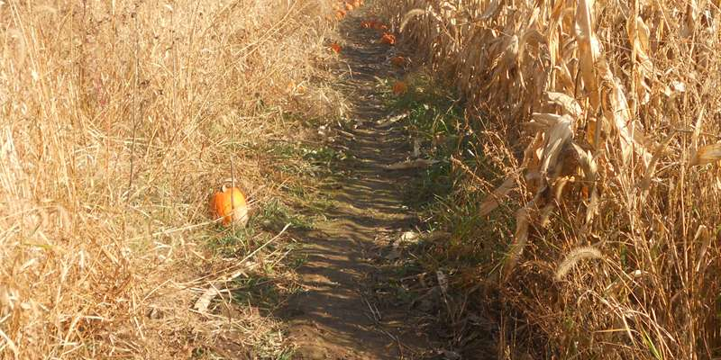 Hike the Norskedalen Corn Maze!