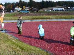 Image for Wetherby Cranberry Company Public Harvest Day