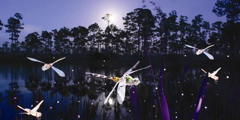 """Dragon Flies"" Light Painting by Florida photographer, Jason D. Page."