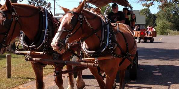 Enjoy a free carriage ride as Coen's Belgians stroll around the park.