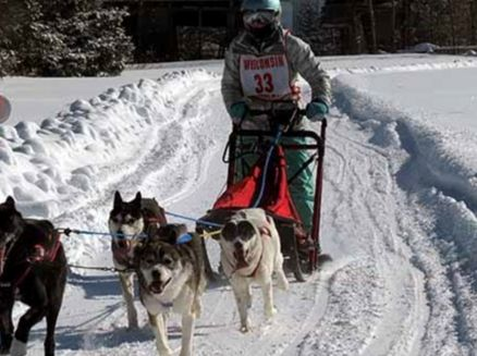 Image for Langlade County Trailblazer Challenge Sled Dog Races