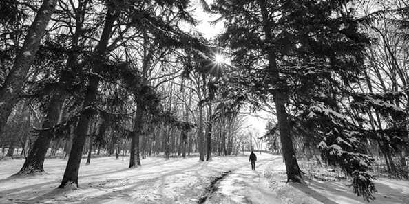 Winter Hikes through our city parks