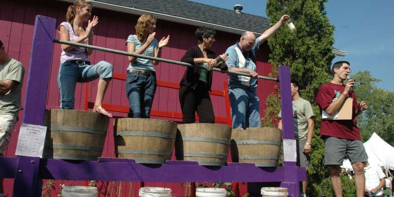 Grape stomping is everyone's favorite contest