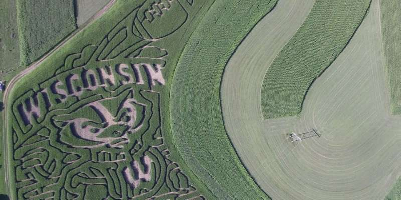 Part of the 2015 corn maze!
