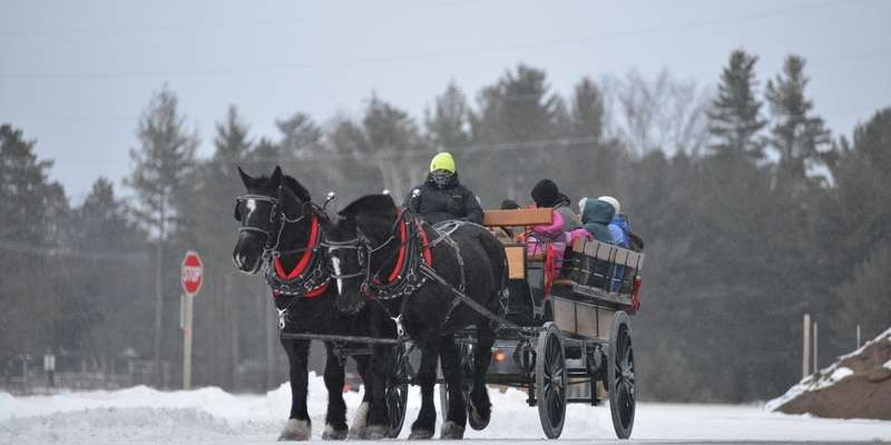 Horse-drawn Wagon Rides