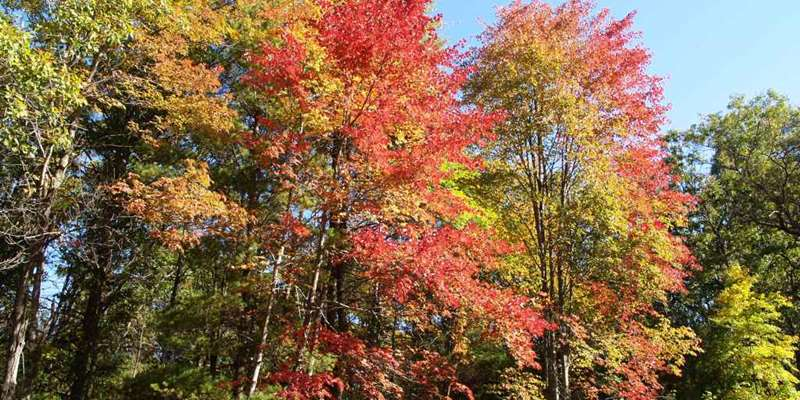 Fall Color Ice Age Hike