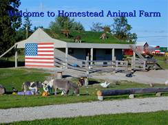 Image for Homestead Animal Farm & Corn Maze