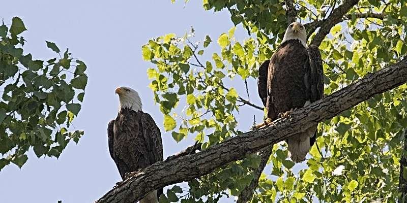 Mississippi Explorer Cruises Two Eagles
