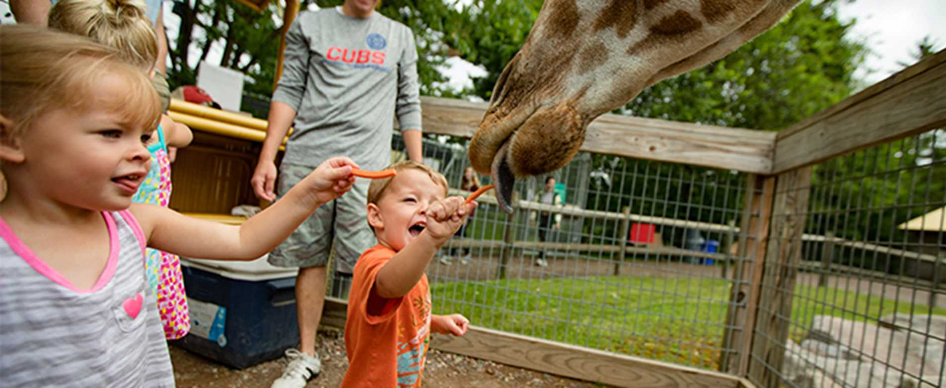Children Feeding Giraffe at Wildwood Wildlife Adventure Park