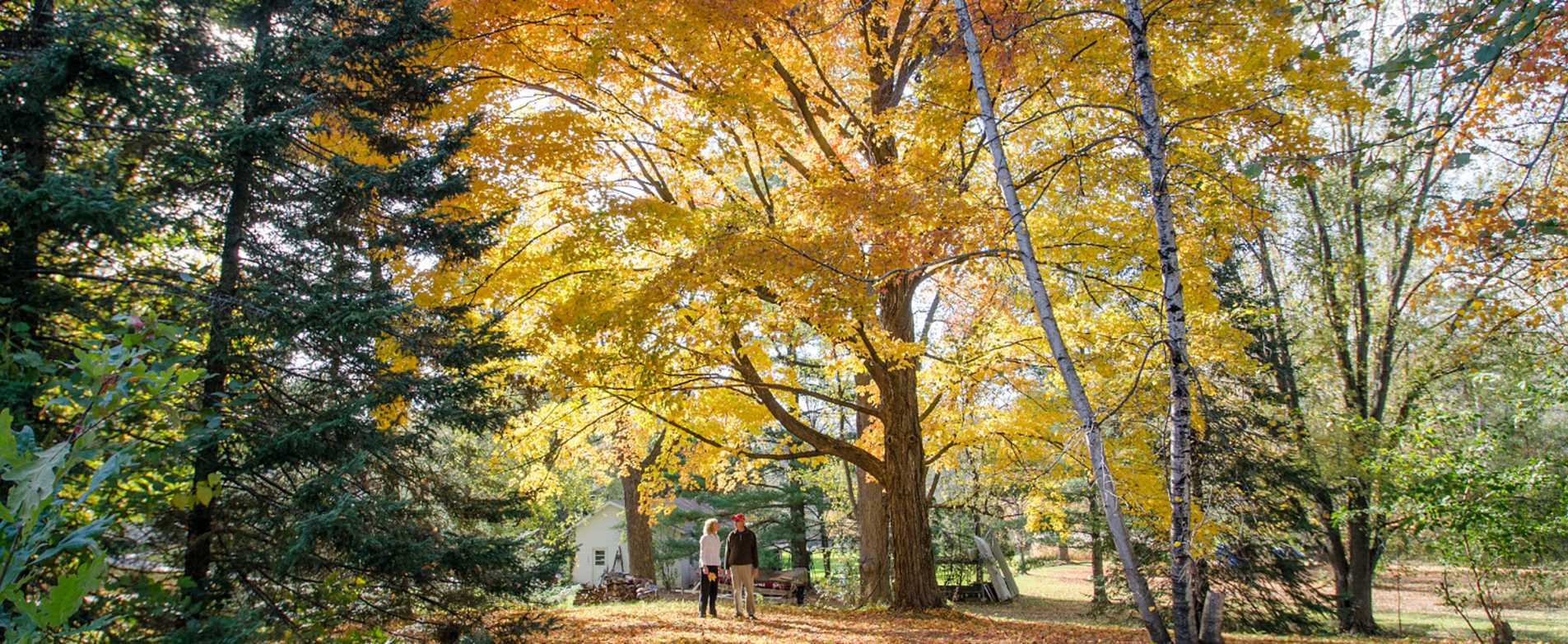 Couple Standing Among Trees of Fall Color