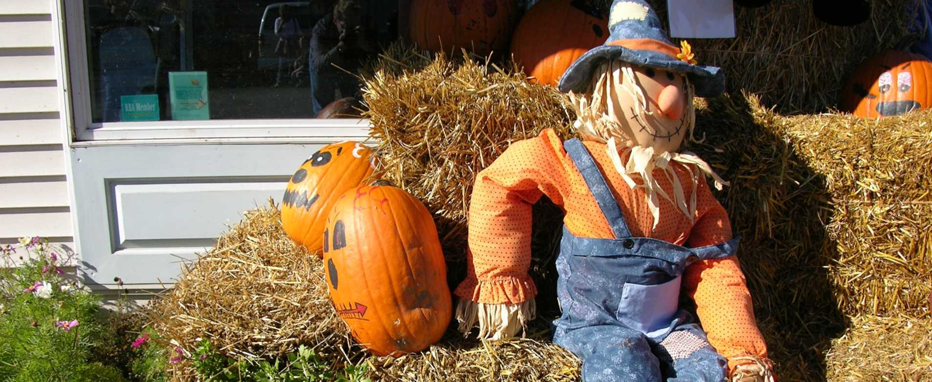 Pumpkin Patch Festival - Egg Harbor
