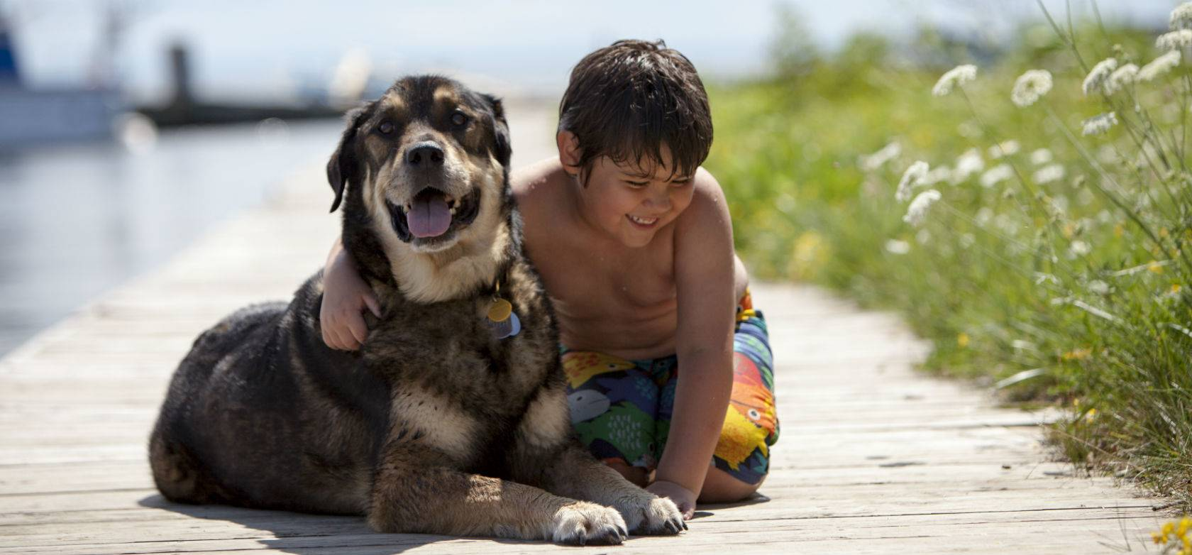 Dog & Boy on Boardwalk
