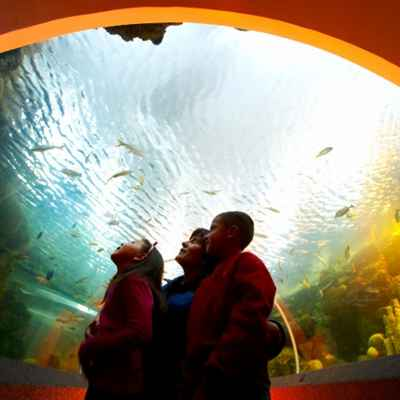 Children looking into large aquarium