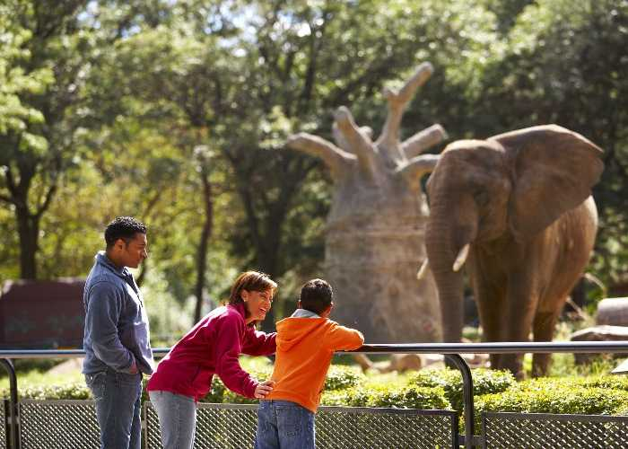 Family observes elephant at zoo