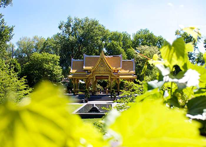 Thai Pavilion in the trees