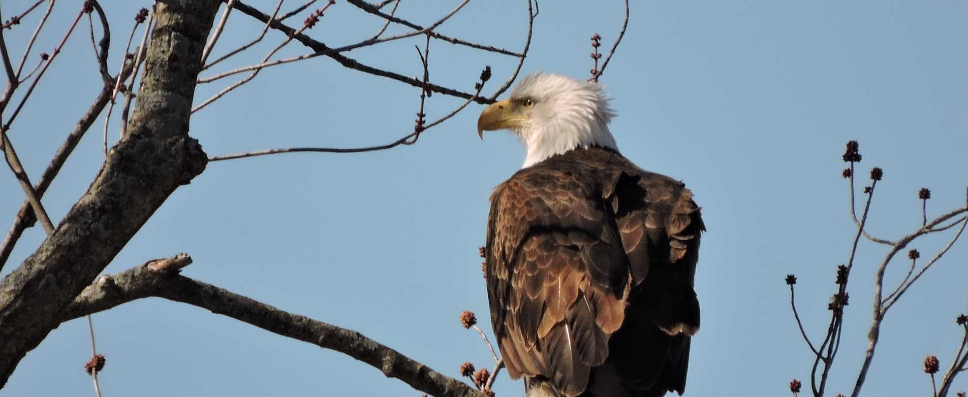 Bald Eagle Watching Day