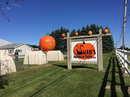 Image for Swan's Pumpkin Farm