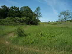 Image for Greenbush Trails