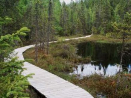 Image for Almon Bog Trails at Almon Park/Buck Lake