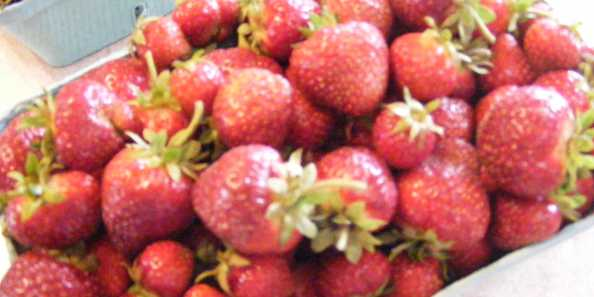 Fresh Picked or U-Pick Strawberries