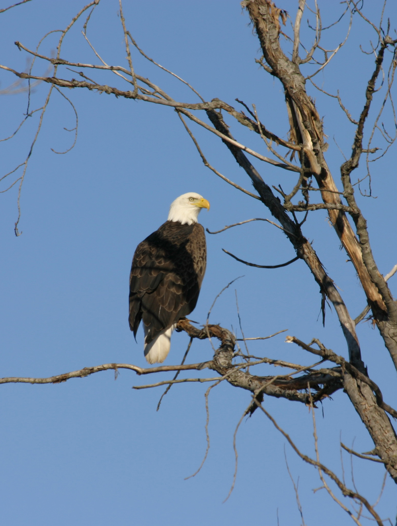 Bald Eagle Watching Prairie Du Sac Wi Travel Wisconsin
