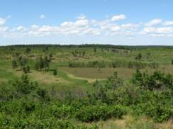 Image for Namekagon Barrens State Wildlife Area