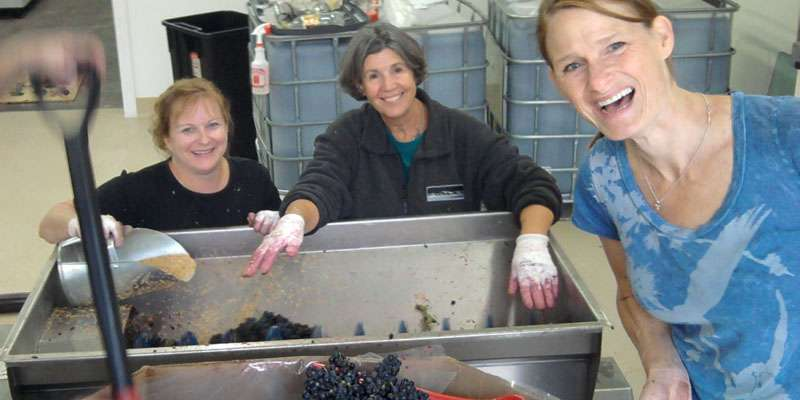 Harvest Time!  Most wine is made from Locally Grown Wisconsin Wine Grapes.
