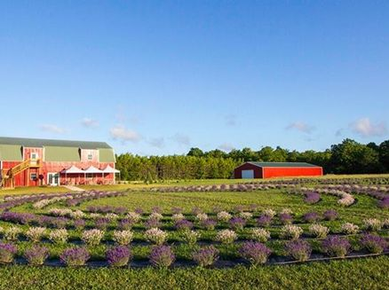 Image for Fragrant Isle Lavender Farm, Shop & Bistro