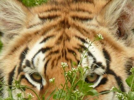 Image for Wisconsin Big Cat Rescue & Educational Center