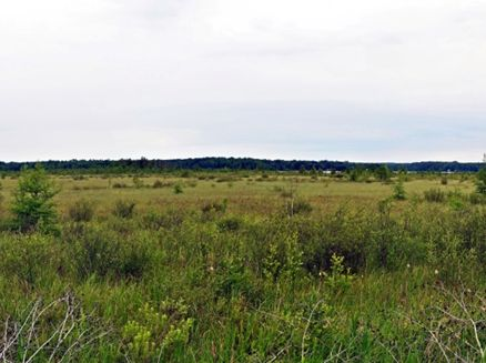Image for Bear Lake Sedge Meadow State Natural Area