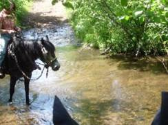Image for Trade River Equestrian Campground