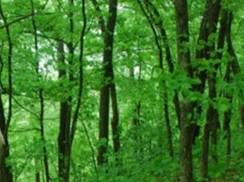 Image for Adiantum Woods State Natural Area
