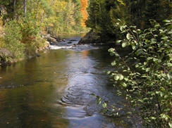 Image for Pike Wild River