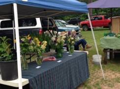 Image for Hodag Farmers Market