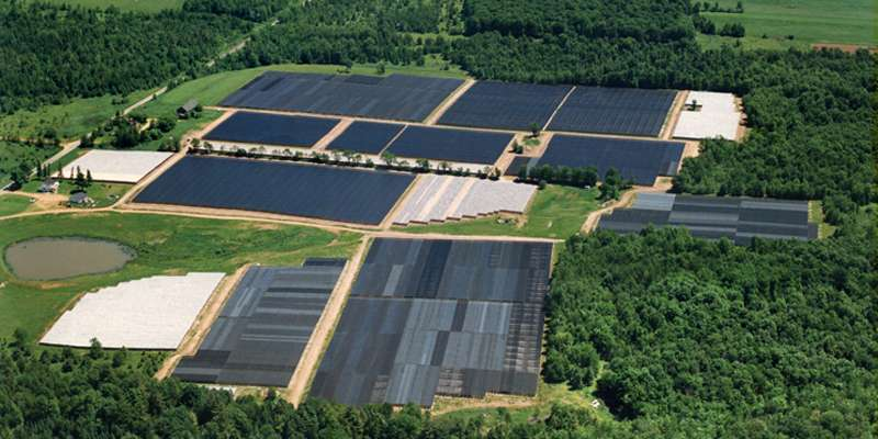 Birds eye view of the Ginseng farms.