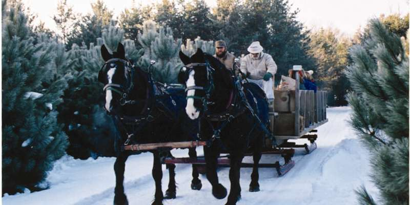 Winter sleigh ride.