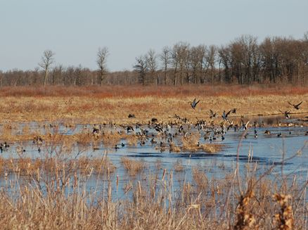 Image for Crex Meadows Wildlife Area