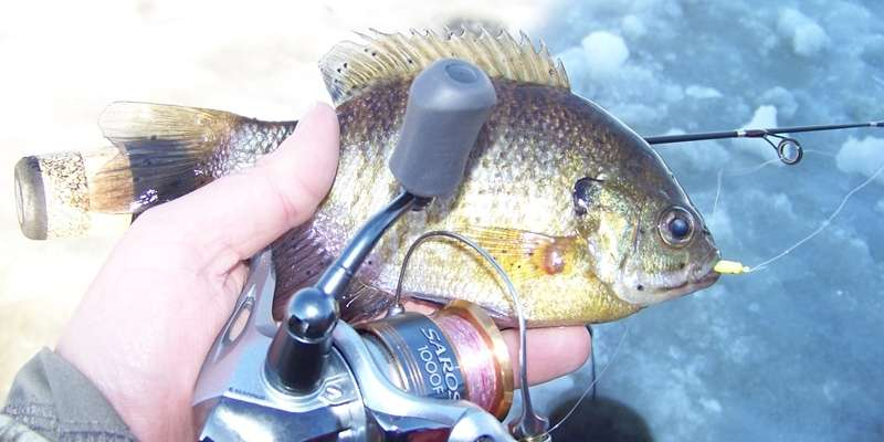 Winter Bluegill on a Price County Lake