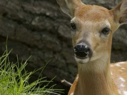 Image for Fawn-Doe-Rosa Wildlife Educational Park