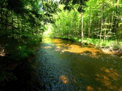 Image for Little Wolf River State Natural Area