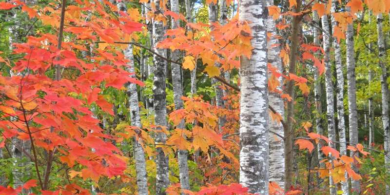 Fall colors in the Brule River State Forest. Photo by Catherine Khalar.