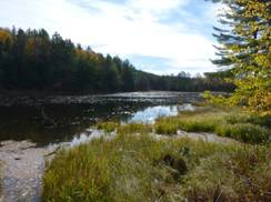 Image for Whisker Lake Wilderness Area (Fox Maple Woods State Natural Area)