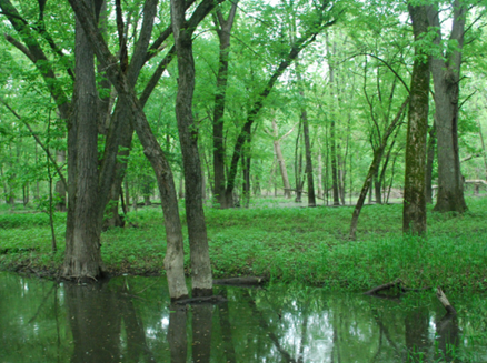 Image for Kickapoo River State Wildlife Area - Wauzeka Unit