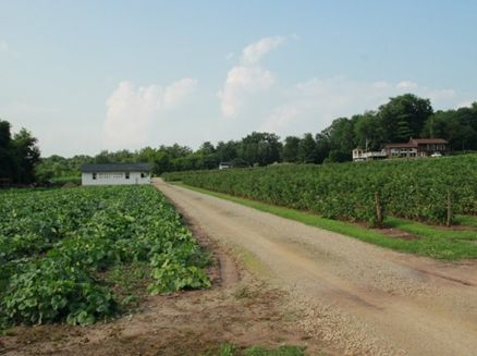 Image for Royalton Berry Farm