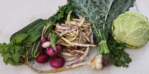 Campo di Bella: Food CSA & Farm-to-Table Services.