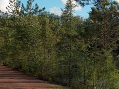 Image for Bearskin State Trail