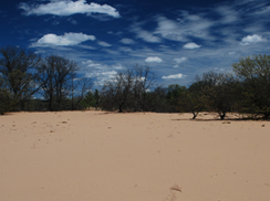 Image for Blue River Sand Barrens State Natural Area