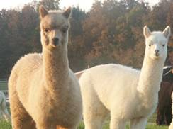 Image for Alpaca General Store
