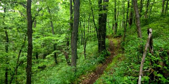 Mountain Bike Trail, Kettle Moraine State Forest, Greenbush Trail
